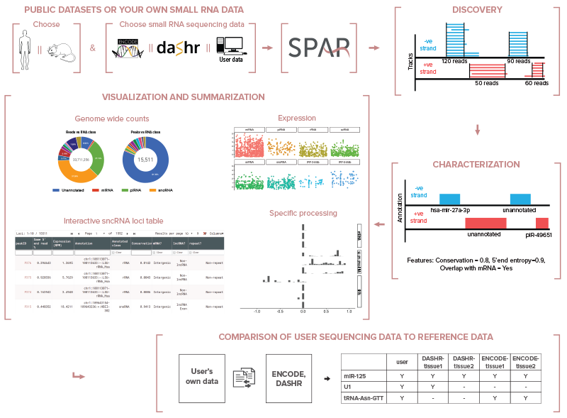 SPAR: pipeline for small RNA-seq, short total RNA-seq, miRNA-seq, single-cell small RNA-seq data processing, analysis, annotation, visualization, and comparison against reference ENCODE and DASHR datasets.